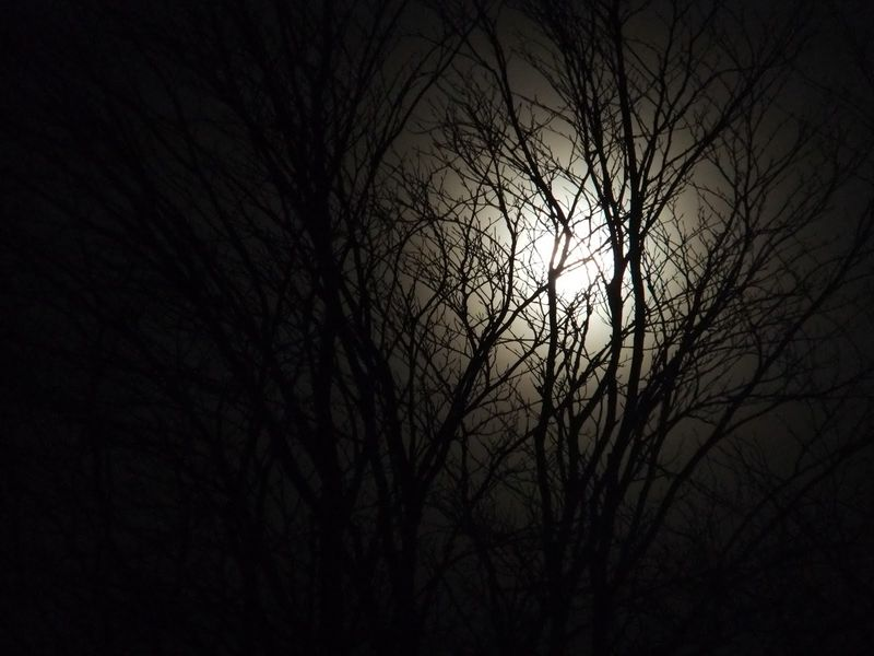 Moon thro trees