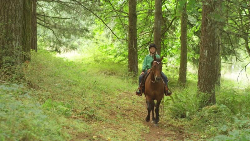 Horseintheforest