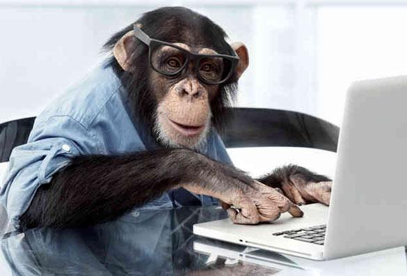 The Job Monkey